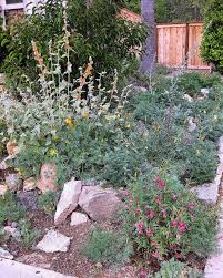 california friendly landscaping