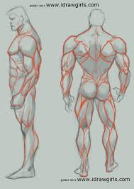 Human Anatomy Muscle 237 Best Art Study Anatomy Images On Pinterest Anatomy