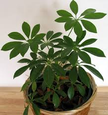 common house plants image house and home design