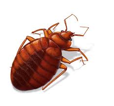 Bed Bug Fogger Bed Bugs Foggers Work Home Beds Decoration