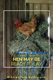 4865 best genius poultry advice chickens ducks quail