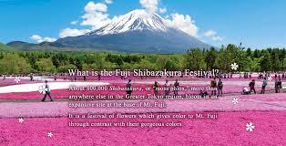 Japanese Language Of Flowers - about us fuji shibazakura festival