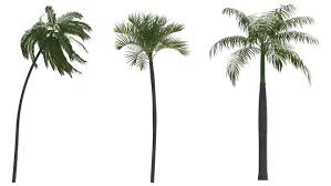 palm tree free 522 free downloads