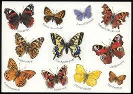 butterflies pictures and names birds butterflies hummingbirds
