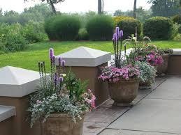 flower id purple spikey plant growing snake backyard spring