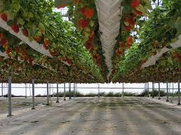 Hydroponics Vegetable Gardening by 76 Best Hydroponics Images On Pinterest Hydroponics Hydroponic