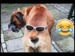 imagenes graciosas videos videos muy graciosos videos de risa 2018 videos graciosos