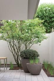 Unique Plant Pots by 759 Best Potential Planters Images On Pinterest Plants Pots And