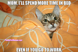 Meme Kitty - if the kitty needs to rest funny cat meme