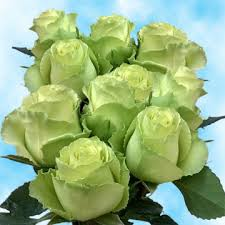 stem roses lime green stem roses wholesale green roses global