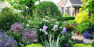 garden plants ornamental plants landscape design growing flowers