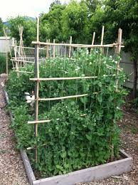 building your own pea trellis wearefound home design