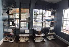 our cattery facilities winding creek kennels inc
