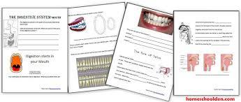 digestive system worksheets u2013 40 page packet homeschool den