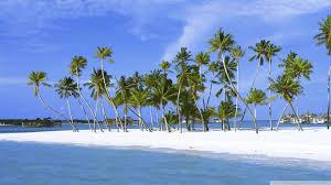 palm trees on island maldives indian 4k hd desktop