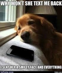 Memes About Texting - forlorn texting doggy meme generator captionator caption generator