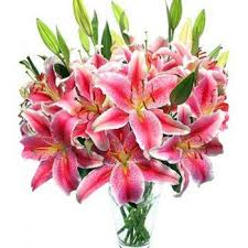 lilies flower sydney fragrance flower delivery 10 pink lilies