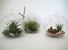 90 best terrariums and planters images on pinterest gardening
