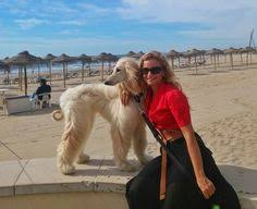 afghan hound breeders new york afghan hound google search afghan hound pinterest afghan