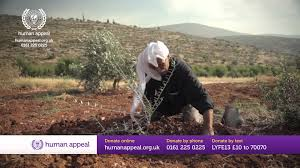 help us plant 800 000 olive trees youtube