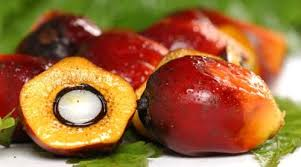 Palm Trees Fruit - red palm oil u2013 how to make money from this lucrative but