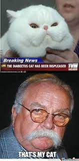 the diabeetus cat by getloose meme center