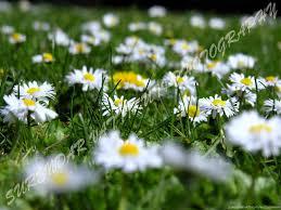 daisys tock net 1024x768 235190 daisys