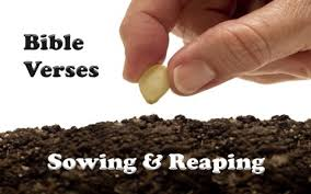 7 bible verses sowing reaping