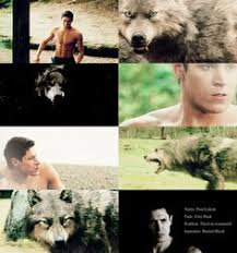 article wolf twilight saga and saga
