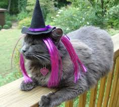 Halloween Costumes Cats Wear Dogs Cats Wearing Halloween Costumes Cats Dogs Halloween 36