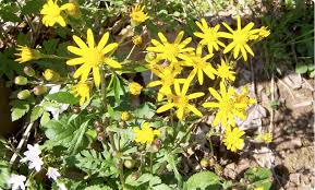 native plants in virginia interested in native plants master gardeners of northern virginia