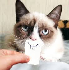 Smiling Cat Meme - grumpy cat smile blank template imgflip