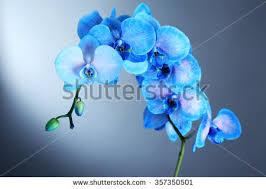 Blue Orchid Flower - illustration blue orchid flowers stock vector 530962924 shutterstock