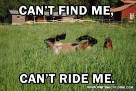 Horse Riding Meme - the top 10 best blogs on horse trainer meme
