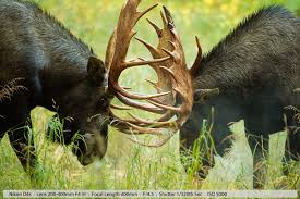 Alaska travel photography images Wildlife trip to alaska part 1 what and why jpg