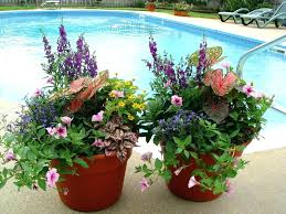 Winter Container Garden Ideas Container Garden Ideas Tay For Winter Pinterest Sun