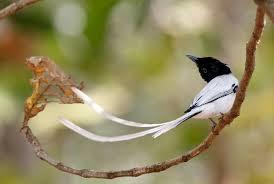 great global backyard bird count this weekend ebird