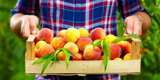 fruit delivery how your busy restaurant can benefit from fresh fruit delivery