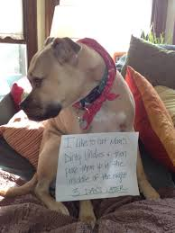 Dog Shaming Meme - i love this dog shaming meme ikelaughs pinterest dog