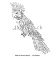 coloring cockatoo parrot sitting stock vector 650862148
