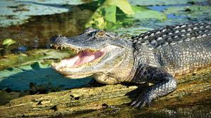 monster truck show lafayette la top 10 hotels near cajundome closest lafayette hotels 49 night