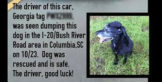 Dog In Car Meme - false porsche driver abandons dog in south carolina