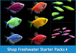 freshwater fish aquarium fish for sale thatpetplace