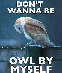 White Owl Meme - 20 hilariously adorable owl memes funny pinterest owl memes