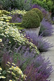 plante vivace soleil les 25 meilleures idées de la catégorie plantes vivaces que vous