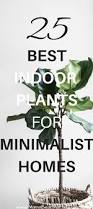 Easy To Care For Indoor Plants 25 Best Indoor Plants For Minimalist Homes Mamabear Martin
