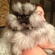Colonel Meow Memes - colonel meow meme generator