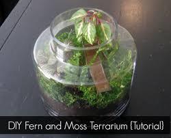 diy fern and moss terrarium mrs hines u0027 class