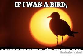 quotes about birds birds of prey