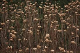 rhs rosemoor a garden in winter u2013 lucid gypsy